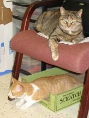 Carley & Tiger