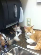 Tommy & Gina's 1st Vet Visit!