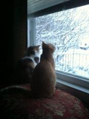 Tommy and Gina watching the snow fall