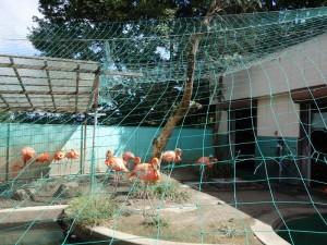 茶臼山動物園 (3)
