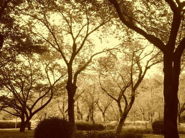 神代植物園&深大寺 (3)