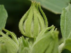 オリンパス TG4 植物 接写 (6)