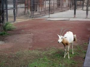茶臼山動物園 (17)