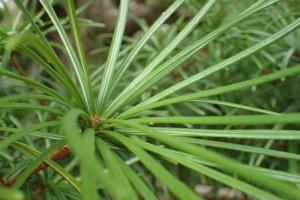 オリンパス TG4 植物 接写 (8)