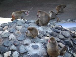 茶臼山動物園 (6)