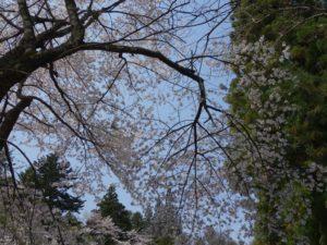 松尾寺 (4)