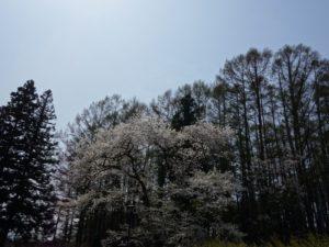 松尾寺 (11)