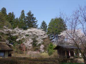 松尾寺 (52)