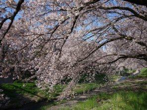 黒沢川 (81)