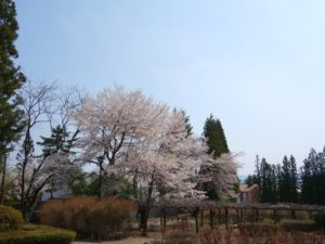 松尾寺 (109)