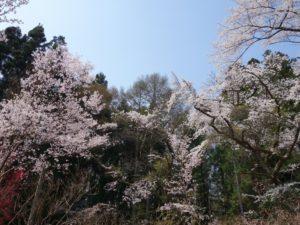 松尾寺 (63)