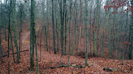 Wooded forest with leaves on the ground and bare trees