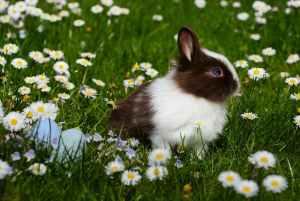 Funny Bunny BBB, het is tenslotte Pasen!
