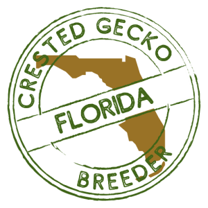 Crested Gecko Breeders in Florida