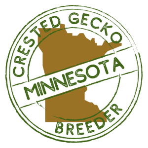 Crested Gecko Breeders in Minnesota