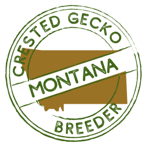 Crested Gecko Breeders in Montana