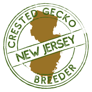 Crested Gecko Breeders in New Jersey