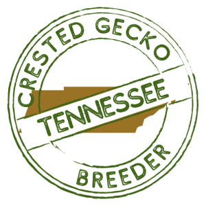 Crested Gecko Breeders in Tennessee