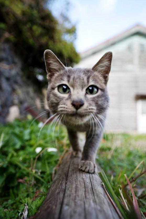 foto foto menakjubkan dari pulau Surga Kucing di Jepang - Foto Kucing di Fukuoka Jepang 04
