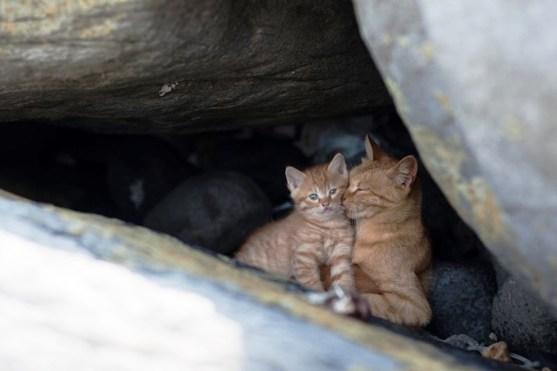 foto foto menakjubkan dari pulau Surga Kucing di Jepang - Foto Kucing di Fukuoka Jepang 07