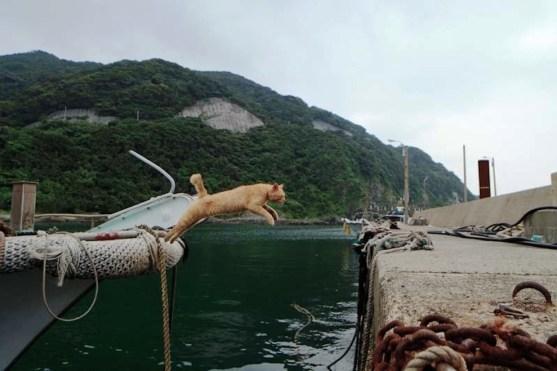 foto foto menakjubkan dari pulau Surga Kucing di Jepang - Foto Kucing di Fukuoka Jepang 11