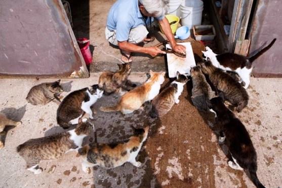 foto foto menakjubkan dari pulau Surga Kucing di Jepang - Foto Kucing di Fukuoka Jepang 13