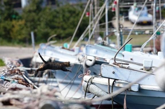 foto foto menakjubkan dari pulau Surga Kucing di Jepang - Foto Kucing di Fukuoka Jepang 25