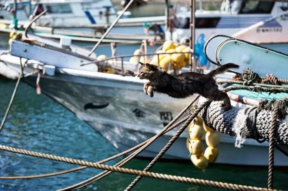 foto foto menakjubkan dari pulau Surga Kucing di Jepang - Foto Kucing di Fukuoka Jepang 27