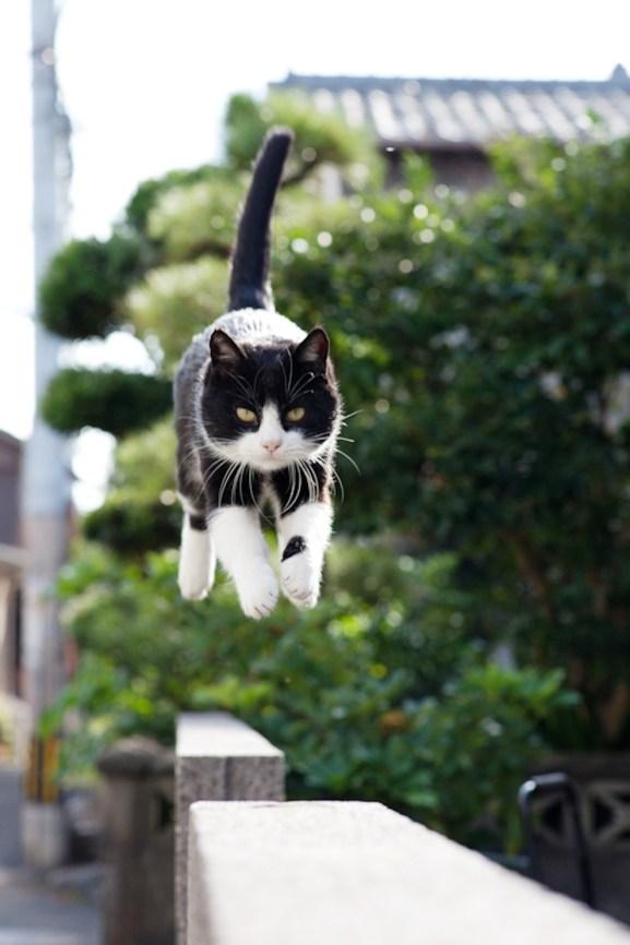 foto foto menakjubkan dari pulau Surga Kucing di Jepang - Foto Kucing di Fukuoka Jepang 31