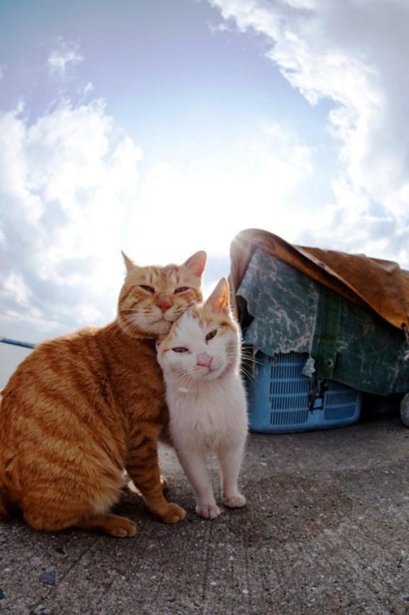 foto foto menakjubkan dari pulau Surga Kucing di Jepang - Foto Kucing di Fukuoka Jepang 37