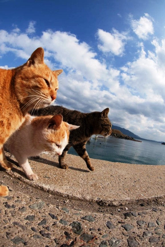 foto foto menakjubkan dari pulau Surga Kucing di Jepang - Foto Kucing di Fukuoka Jepang 45