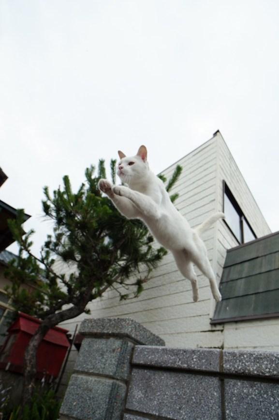 foto foto menakjubkan dari pulau Surga Kucing di Jepang - Foto Kucing di Fukuoka Jepang 49