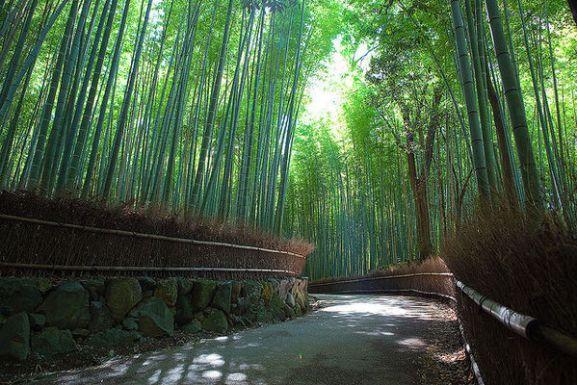 8 Spot Fotografi Terbaik di Kyoto Jepang