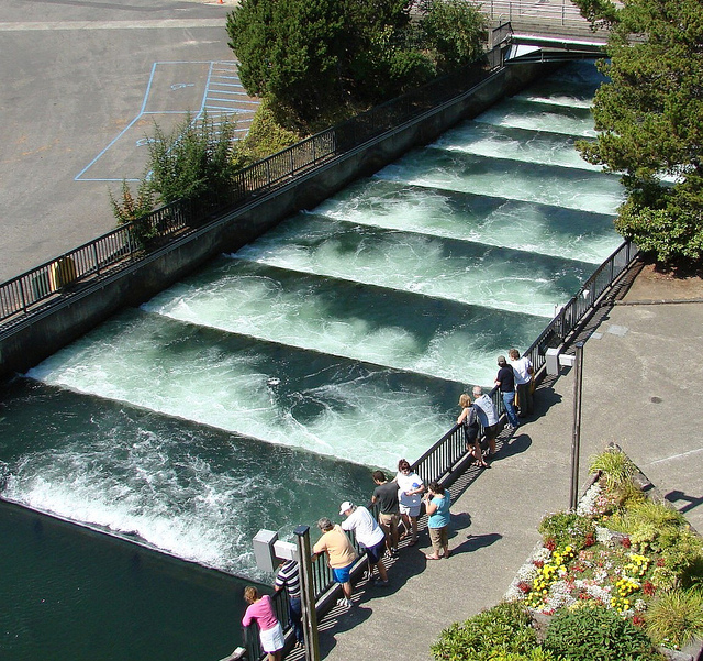 Stopping at the fish ladder at Bonneville Dam on the Columbia River will entertain the kids on a summer road trip between Portland and Spokane. Ten Thousand Hour Mama
