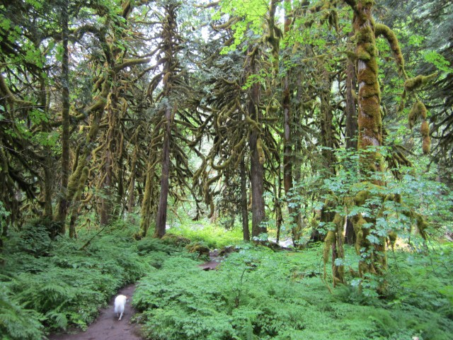 Old Salmon River Trail, Welches, OR