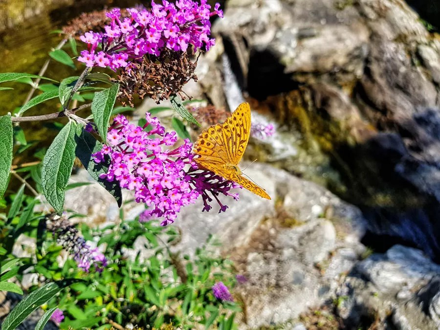 Tenuta Casa Cima, Guesthouse, Butterfly