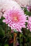 flowers-of-dhulikhel-mountain-resort-17