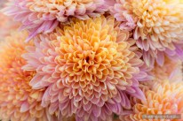 flowers-of-dhulikhel-mountain-resort-4