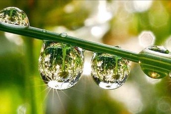 Dew appears everywhere with sufficient cooling