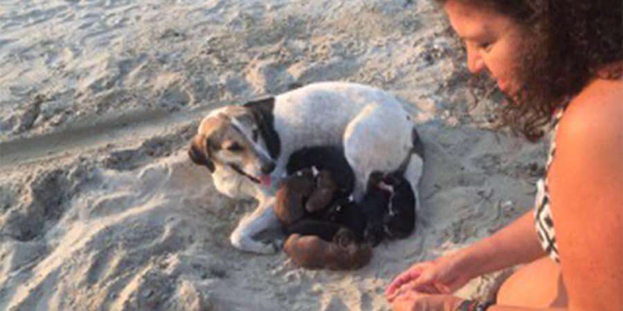 Los Cachorros de Durres, Albania
