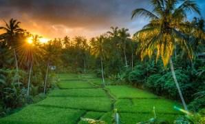Cara Menentukan Harga Tanah