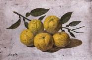 P6 柚子