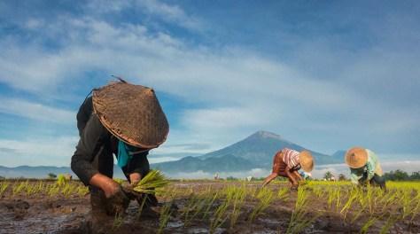 kehidupan petani