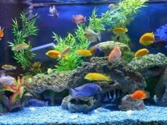Rekomendasi Ikan Hias