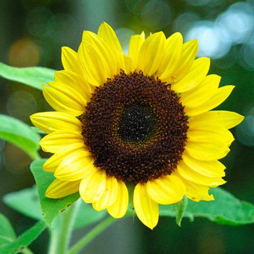 Jenis Bunga Cantik