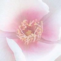 Terapia Floral Evolutiva: o que é e como acontece