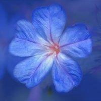 Cerato, um dos 12 primeiros florais de Bach, e o Outono da minha carreira como Terapeuta Floral