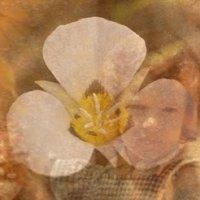 Amor Alquímico - acolhimento da Criança Interior na jornada com o Arquétipo do floral da Mariposa Lily
