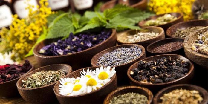 Naturopatia Práticas Terapêuticas SUS