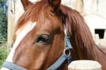 Cursos Monitor Equitación Terapéutica la Corbera (Sevilla)